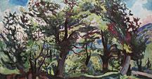 Oak trees in summertime in Malataverne